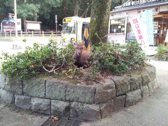Hirsche Nara Japan