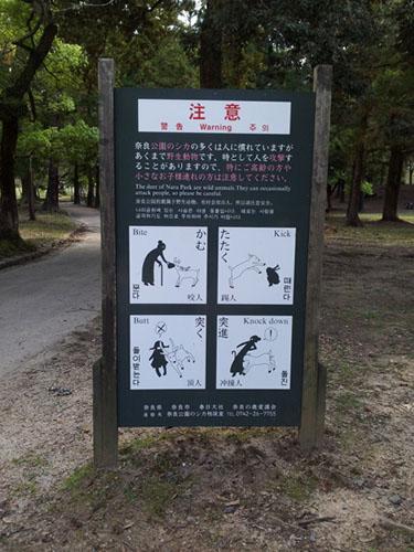 Hirsche Nara Park Japan deer
