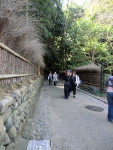 Arashiyama Bambuswald